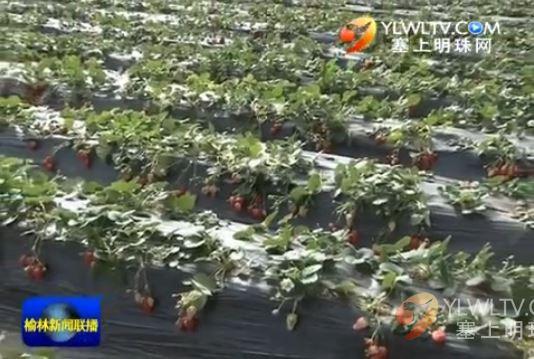 神木县:依托农业产业园区 带动农民增收致富