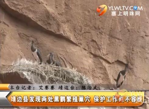 靖边县发现两处黑鹳繁殖巢穴 保护工作刻不容缓
