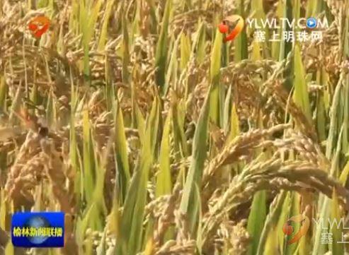 点击观看《榆阳区鱼河镇:特色农业发展格局促进农民增收致富》