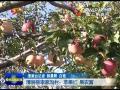 点击观看《清涧县李家沟村:苹果红 果农富》