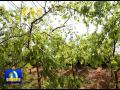 点击观看《神木现代特色农业示范园:引进新品种 展示新技术(榆林)》